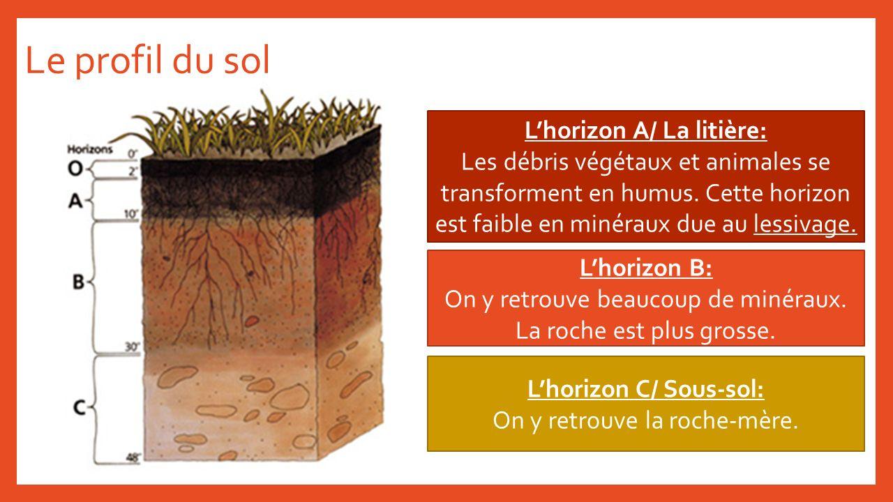 L'horizon A/ La litière: L'horizon C/ Sous-sol: