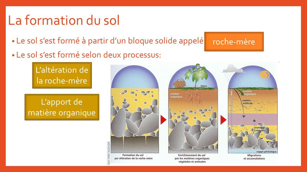La formation du sol roche-mère