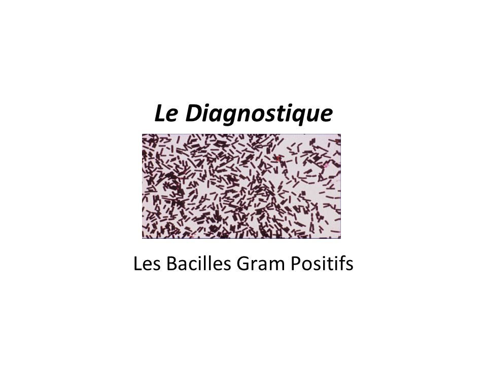 Les Bacilles Gram Positifs