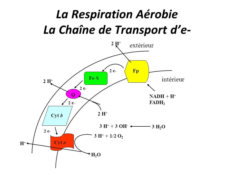 La Respiration Aérobie La Chaîne de Transport d'e-