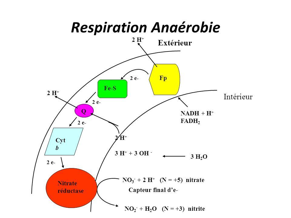 Respiration Anaérobie