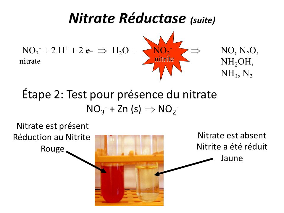Nitrate Réductase (suite)