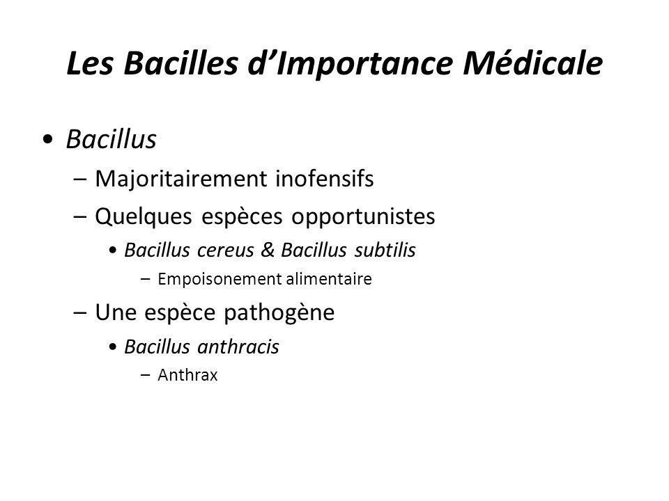 Les Bacilles d'Importance Médicale