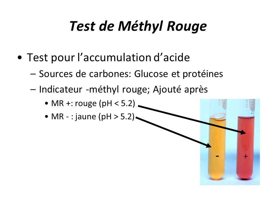 Test de Méthyl Rouge Test pour l'accumulation d'acide