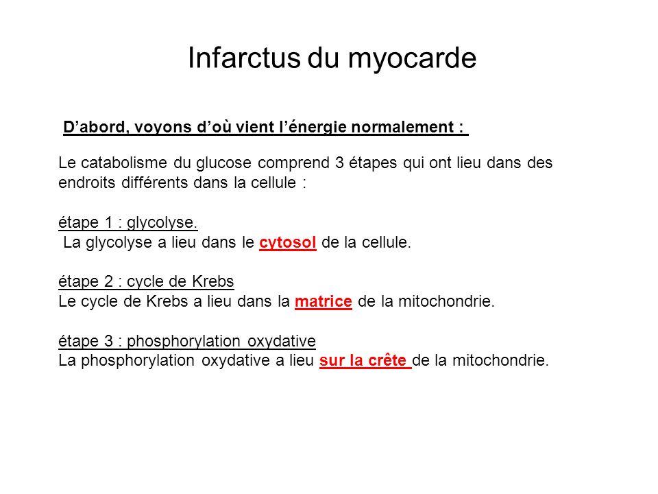 Infarctus du myocarde D'abord, voyons d'où vient l'énergie normalement :