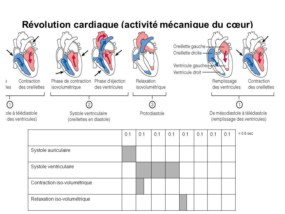 Révolution cardiaque (activité mécanique du cœur)