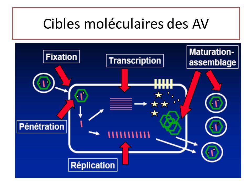 Cibles moléculaires des AV