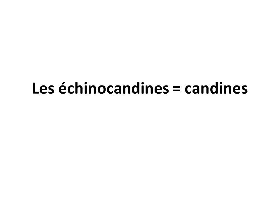 Les échinocandines = candines