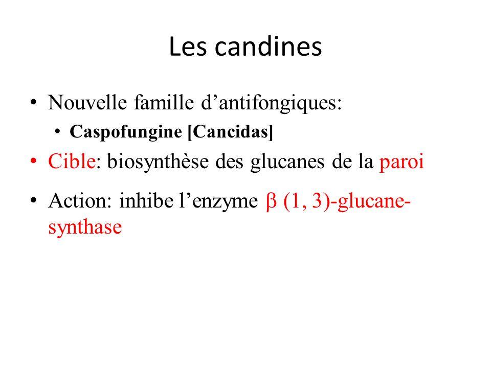 Les candines Nouvelle famille d'antifongiques: