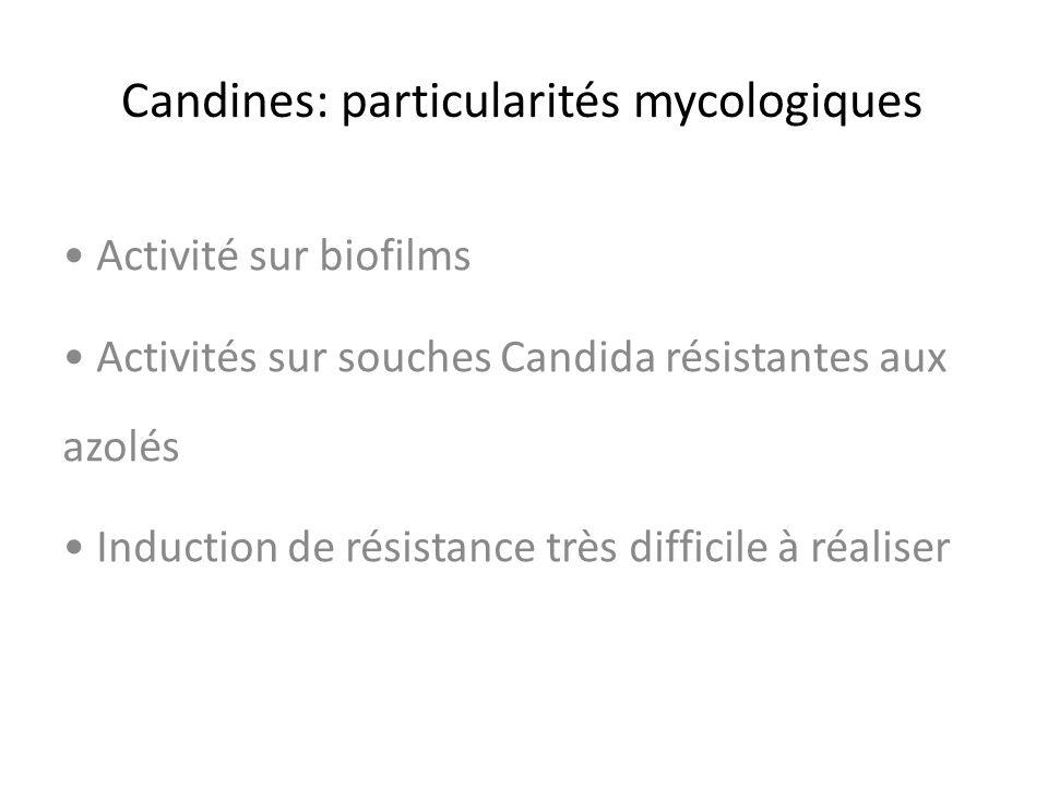 Candines: particularités mycologiques