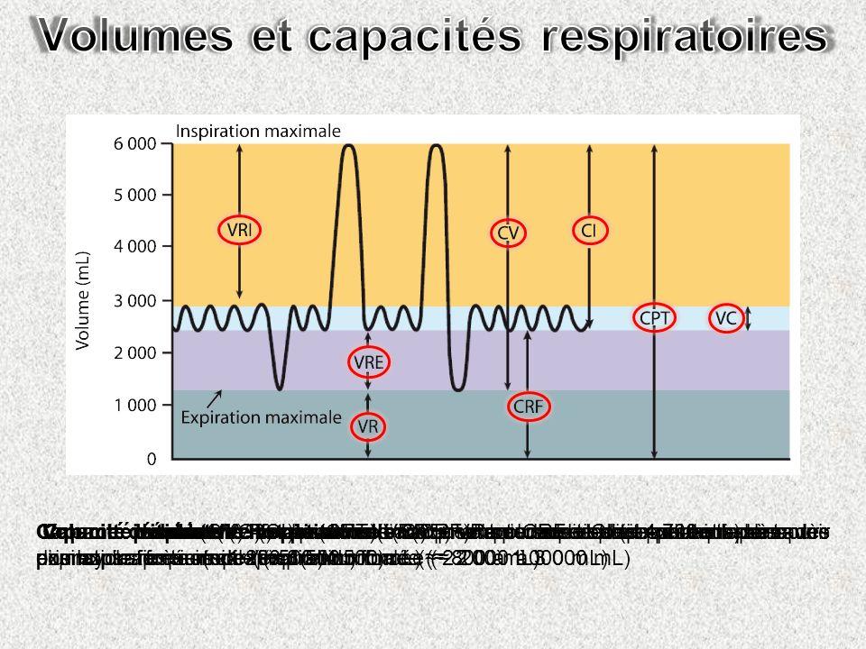 Volumes et capacités respiratoires