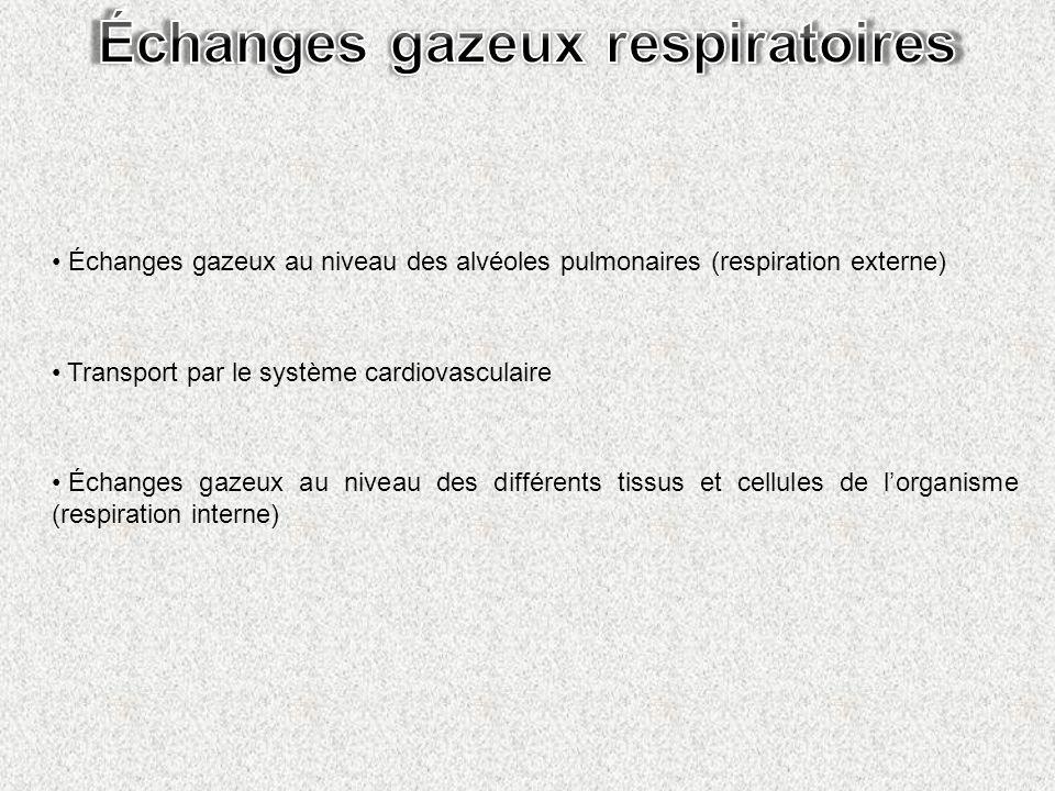 Échanges gazeux respiratoires