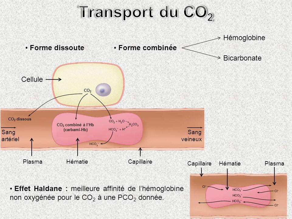 Transport du CO2 Forme dissoute Forme combinée Hémoglobine Bicarbonate
