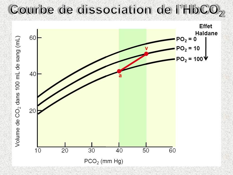 Courbe de dissociation de l'HbCO2