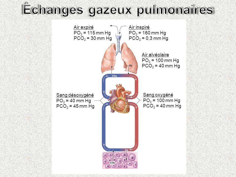 Échanges gazeux pulmonaires