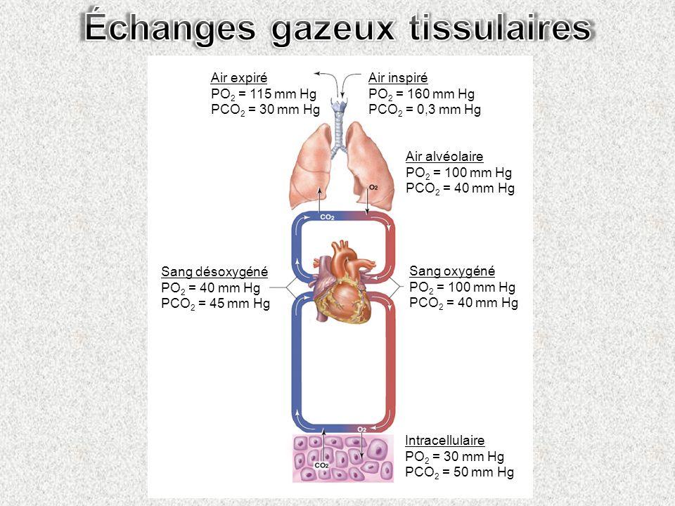 Échanges gazeux tissulaires