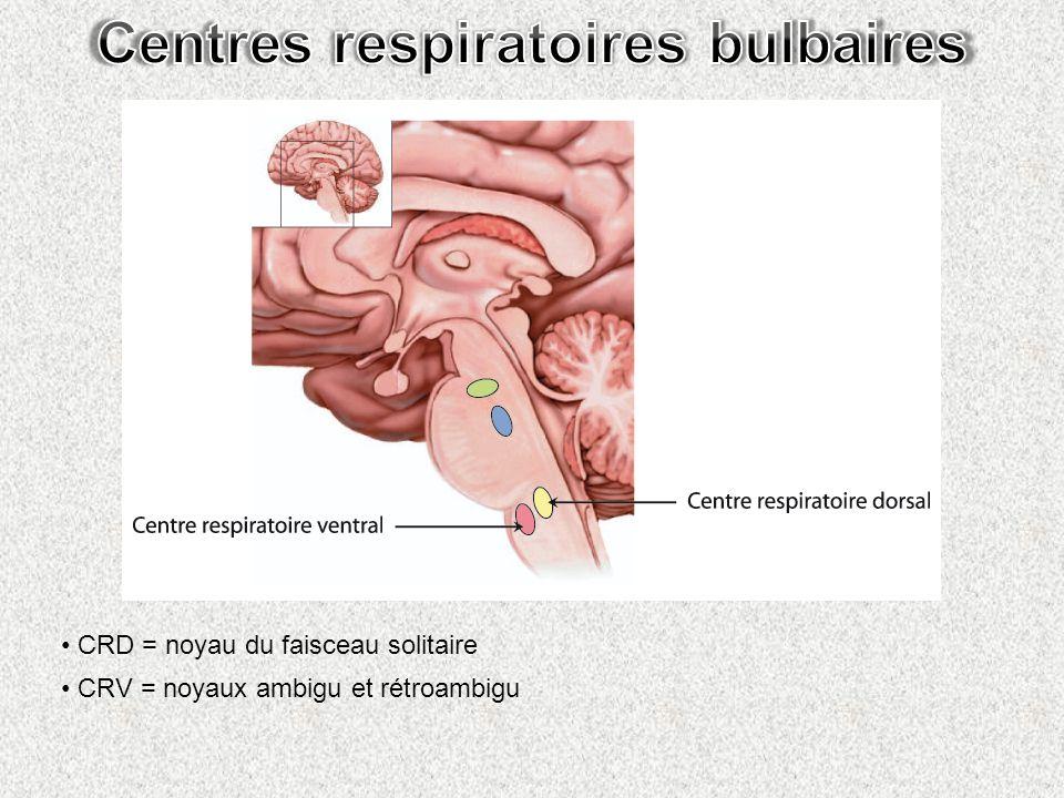 Centres respiratoires bulbaires