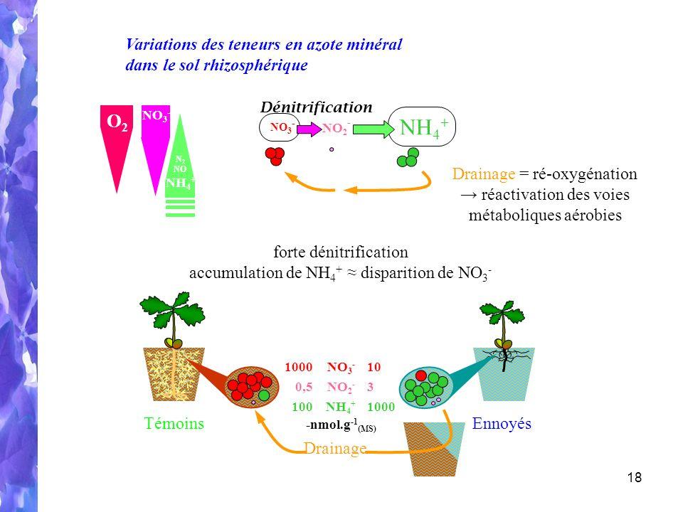 NH4+ O2 Variations des teneurs en azote minéral