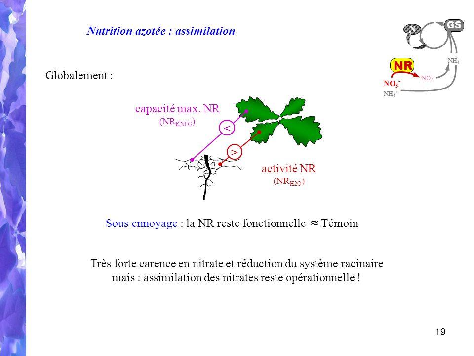 Nutrition azotée : assimilation