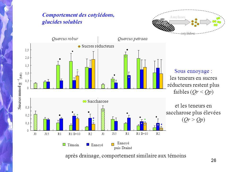 Comportement des cotylédons, glucides solubles