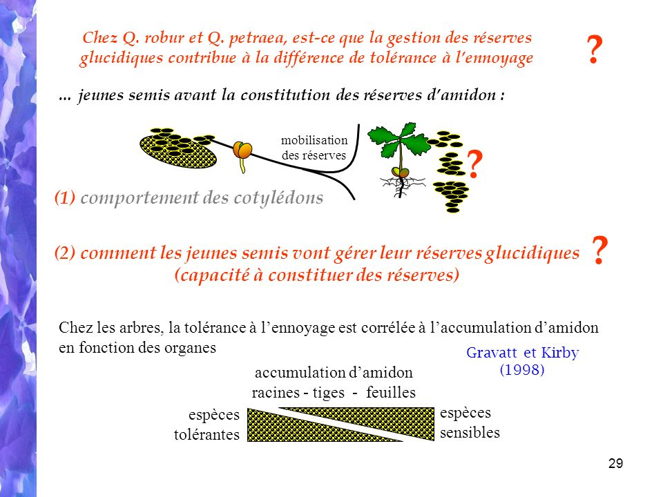 (1) comportement des cotylédons