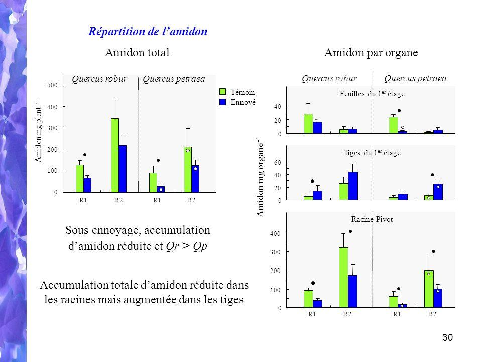 Sous ennoyage, accumulation d'amidon réduite et Qr > Qp