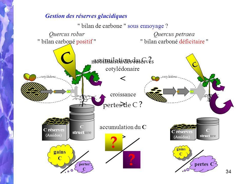 C < > > assimilation du C C pertes de C