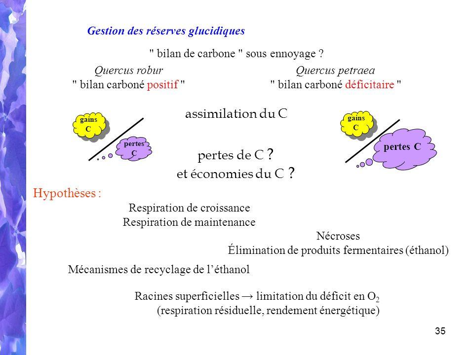 assimilation du C pertes de C et économies du C Hypothèses :
