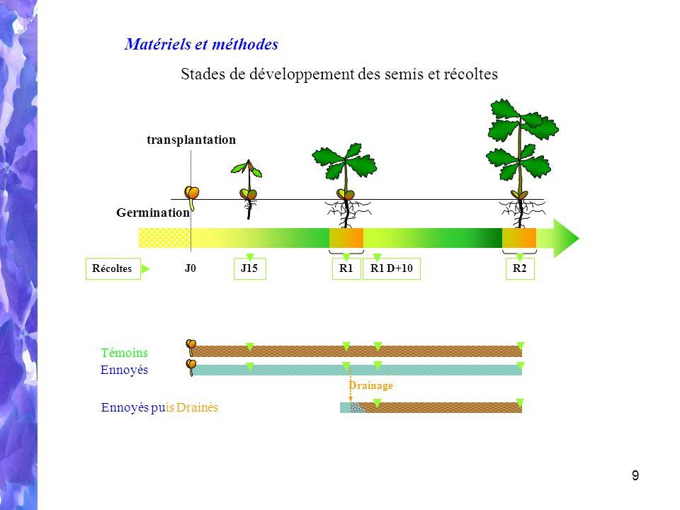Stades de développement des semis et récoltes