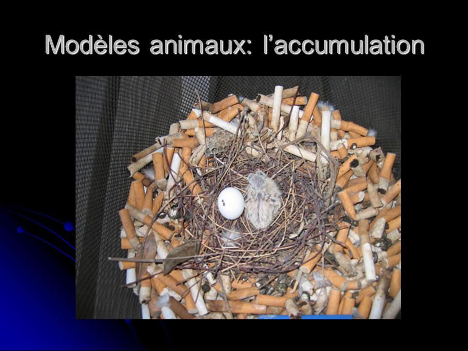 Modèles animaux: l'accumulation