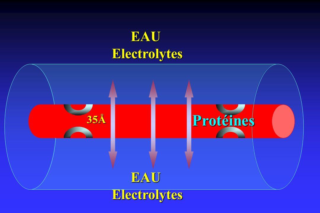 EAU Electrolytes Protéines 35Å