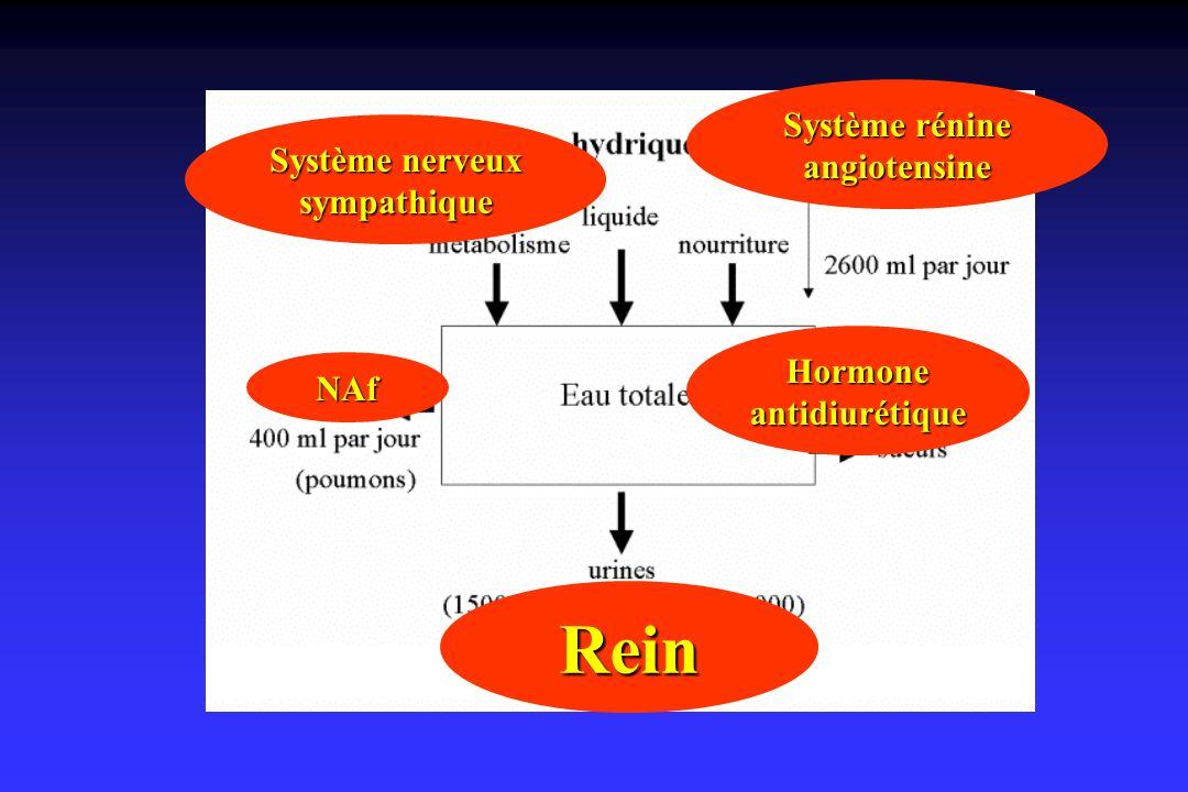 Rein Système rénine angiotensine Système nerveux sympathique