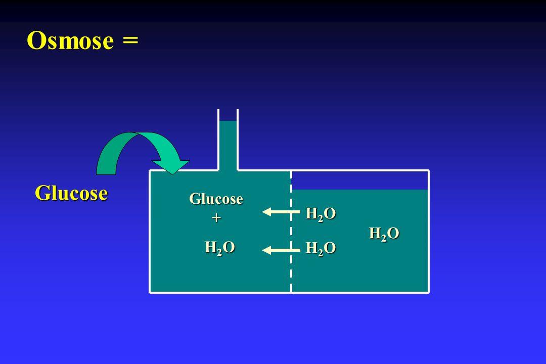Osmose = Glucose Glucose + H2O H2O H2O