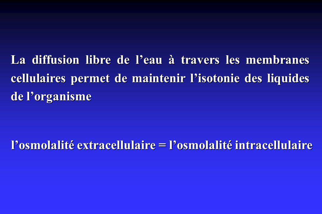 l'osmolalité extracellulaire = l'osmolalité intracellulaire