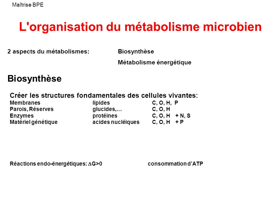 L organisation du métabolisme microbien