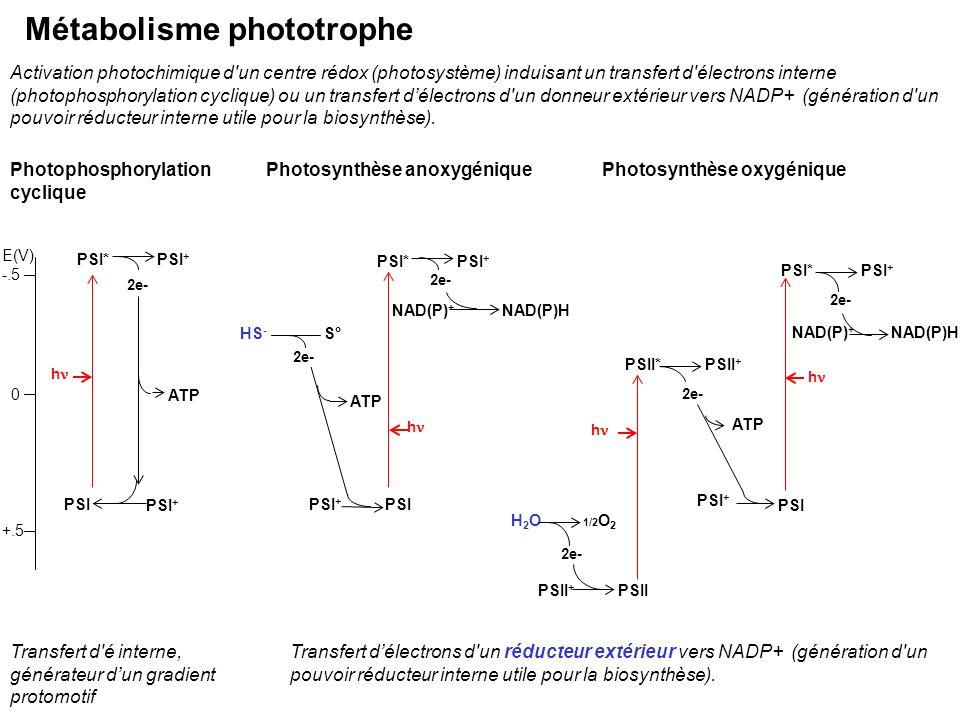 Métabolisme phototrophe