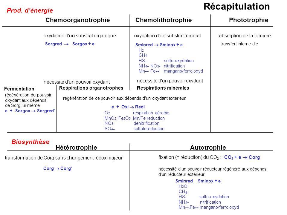 Récapitulation Prod. d'énergie Chemoorganotrophie Chemolithotrophie