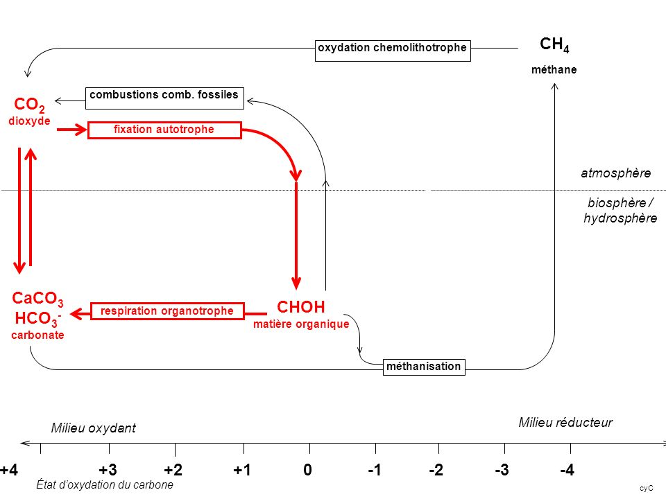 CH4 méthane CO2 dioxyde CaCO3 HCO3- CHOH carbonate matière organique