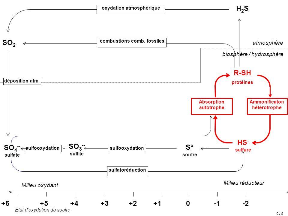 H2S SO2 R-SH protéines HS- S° sulfure SO3-- SO4-- soufre sulfite