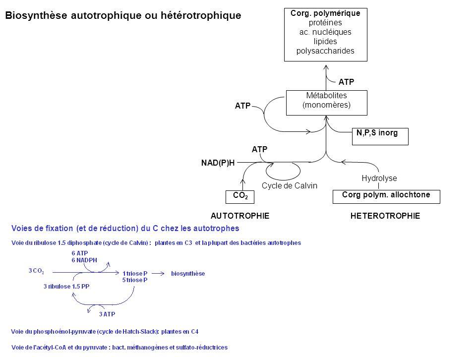 Biosynthèse autotrophique ou hétérotrophique