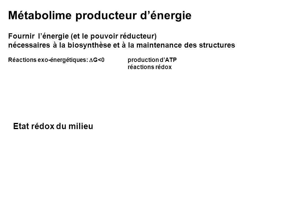 Métabolime producteur d'énergie