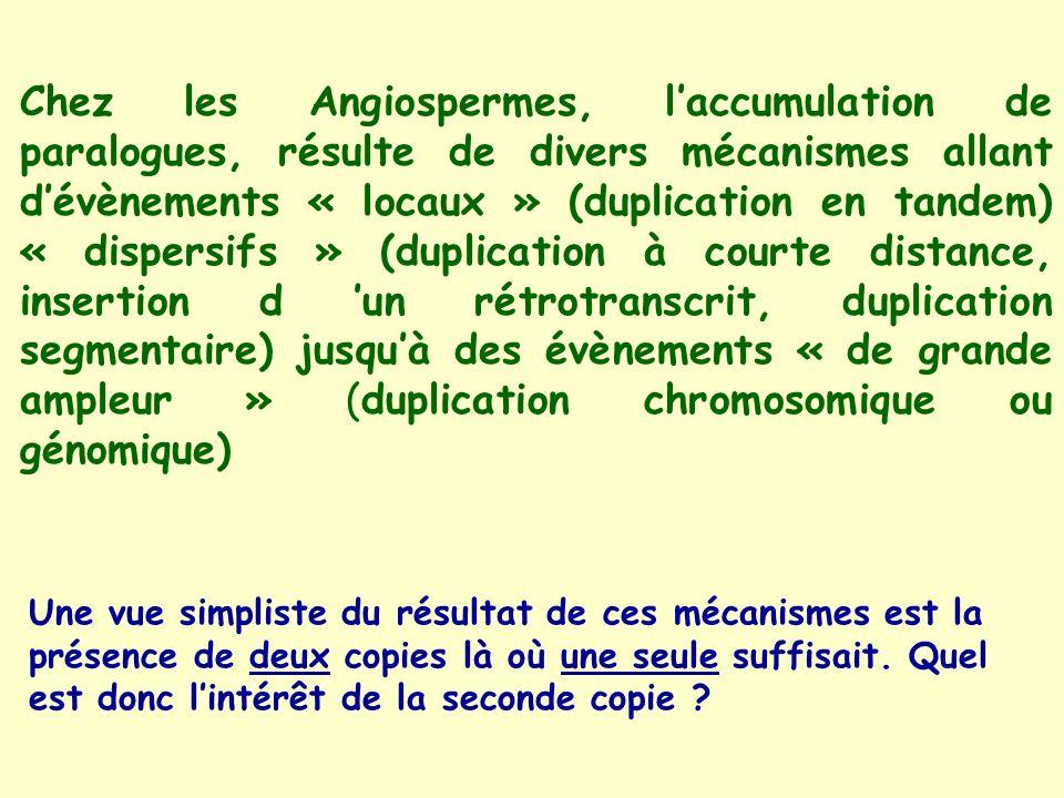 Chez les Angiospermes, l'accumulation de paralogues, résulte de divers mécanismes allant d'évènements « locaux » (duplication en tandem) « dispersifs » (duplication à courte distance, insertion d 'un rétrotranscrit, duplication segmentaire) jusqu'à des évènements « de grande ampleur » (duplication chromosomique ou génomique)
