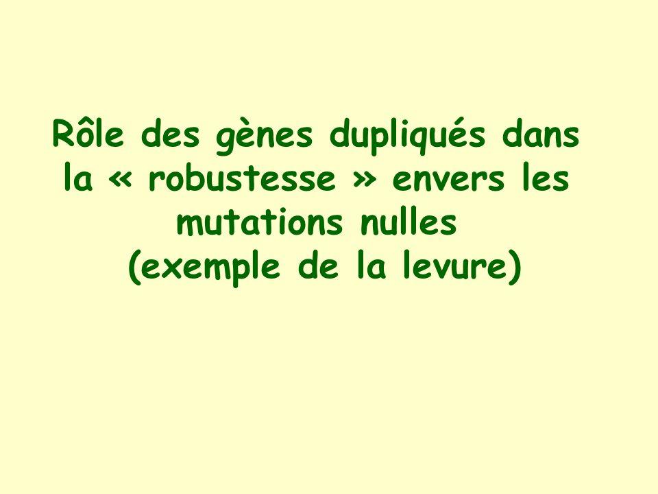 Rôle des gènes dupliqués dans la « robustesse » envers les