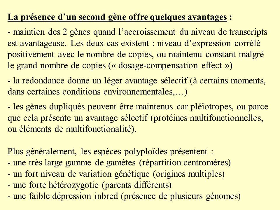 La présence d'un second gène offre quelques avantages :