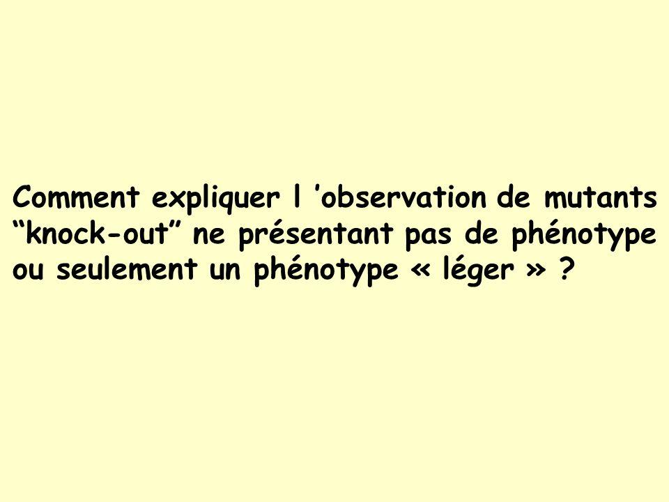 Comment expliquer l 'observation de mutants knock-out ne présentant pas de phénotype ou seulement un phénotype « léger »