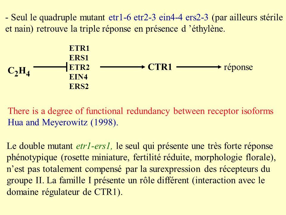 et nain) retrouve la triple réponse en présence d 'éthylène.