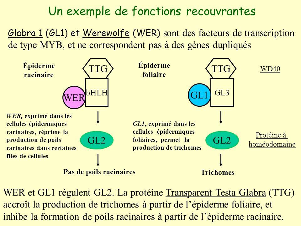 Un exemple de fonctions recouvrantes