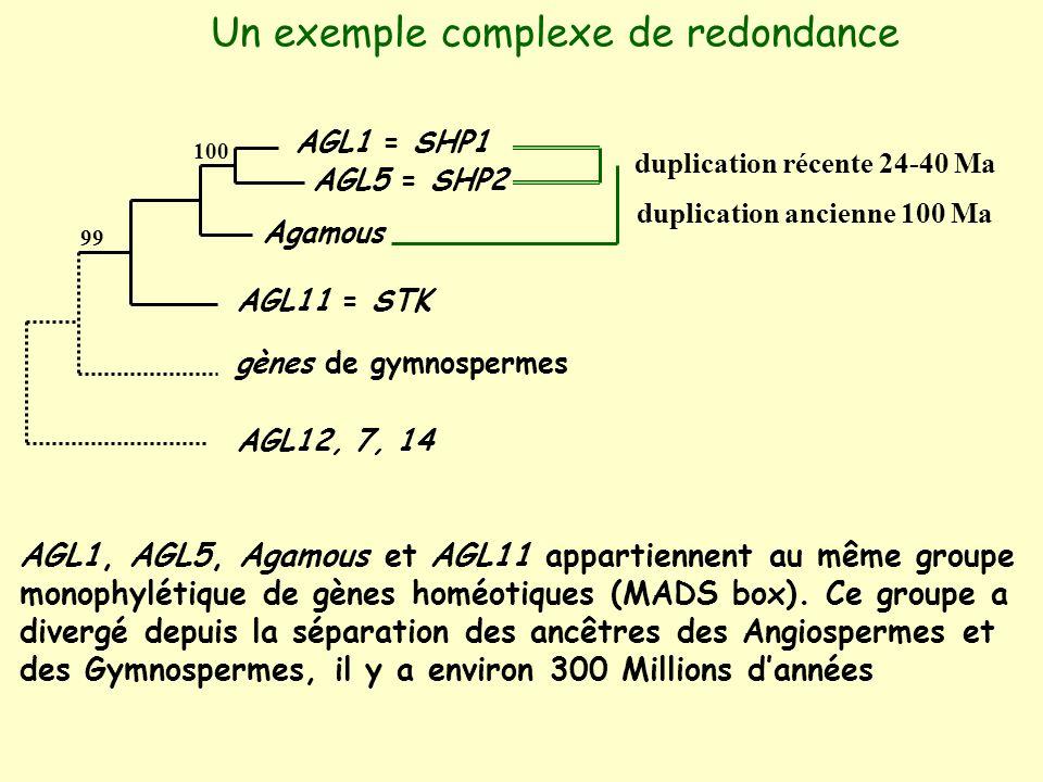 Un exemple complexe de redondance