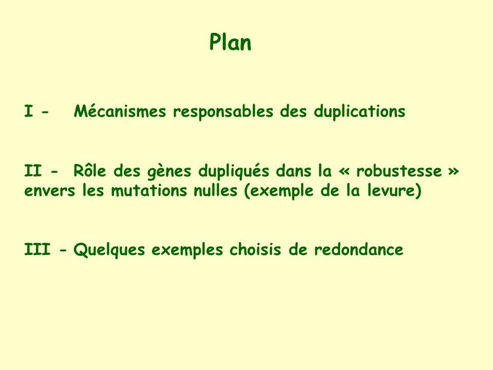 Plan I - Mécanismes responsables des duplications