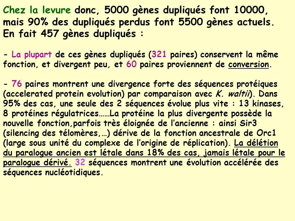 Chez la levure donc, 5000 gènes dupliqués font 10000,